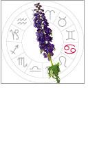 Delphimium Flowers