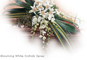 Funeral Flowers White Orchid Casket Spray