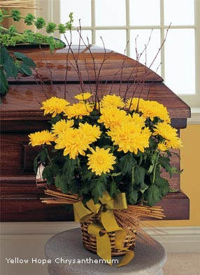 Yellow Hope Chrysanthemums
