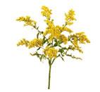 Soldaster Flower